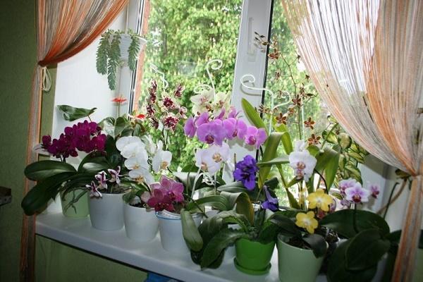 цветы на подоконнике на кухне фото